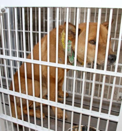 香川県三豊市の幼稚園で園児らを襲った犬=17日午後、香川県観音寺市