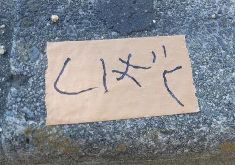 歩道の縁石などに貼られた粘着テープに「しばく」の文字=8日、岸和田市