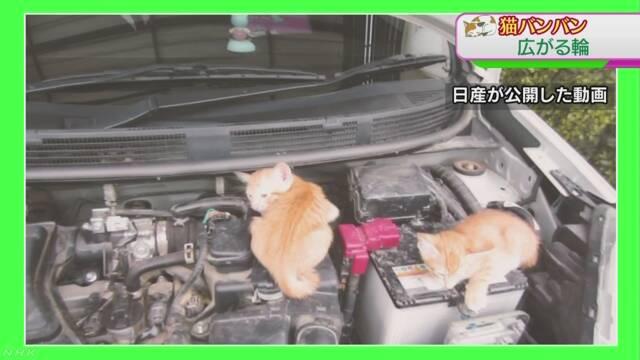 「猫バンバン」広がる 猫の命とドライバーの安全を守る | NHKニュース