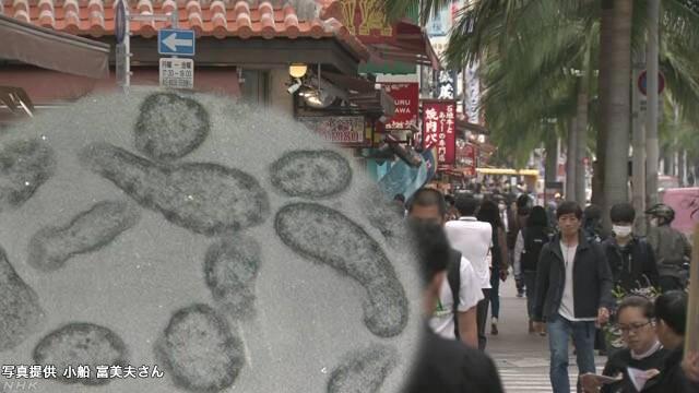 News Up 1人の観光客が感染広げたか ワクチン接種を | NHKニュース