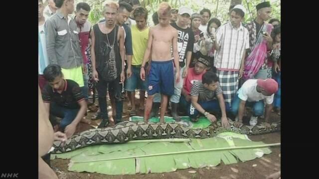 体長8mニシキヘビが女性を丸飲み 体内から遺体 インドネシア
