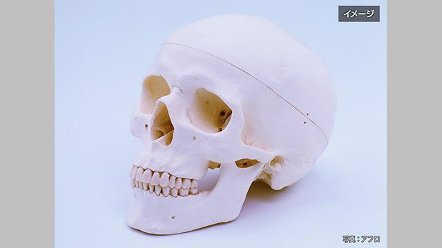 高校の頭蓋骨 人間のものと判明 生徒が美術でデッサン 鹿児島