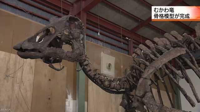 国内最大の恐竜化石「むかわ竜」 骨格復元した模型完成 | NHKニュース