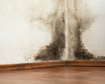 Coconut Creek Tenant Mold