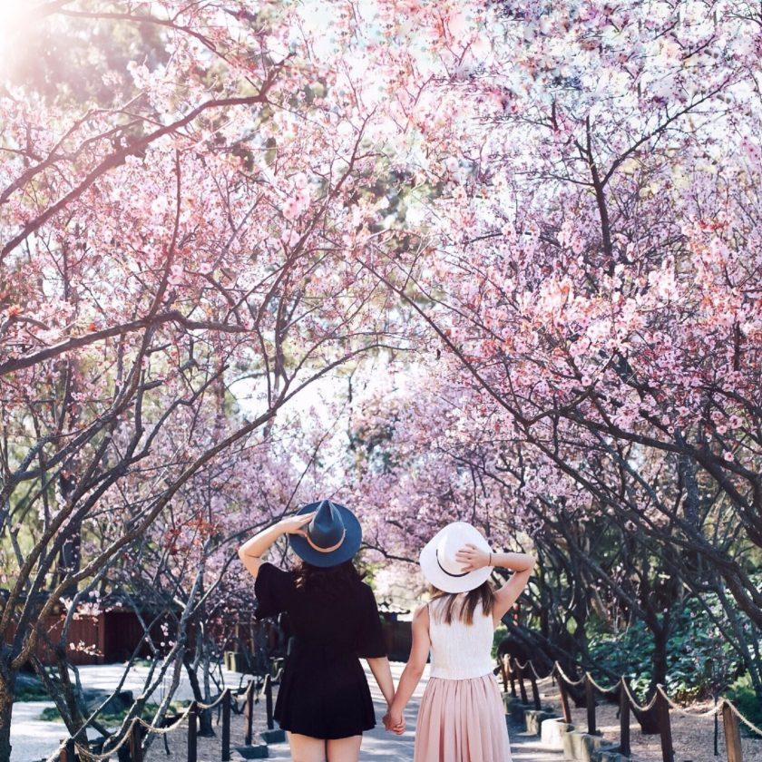 atdw-the-sydney-cherry-blossom-festival-59758e8783c8140750bd3dd3-1600x1600