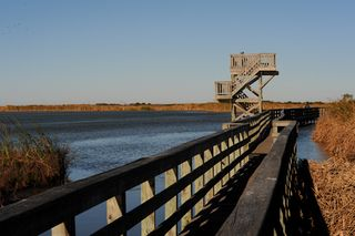Port Aransas Birding Center by Ted Lee Eubanks