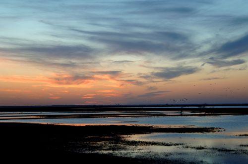 Cheyenne Bottoms Sunset with Waterfowl 600
