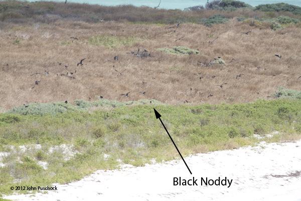 BlackNoddy_closer19495