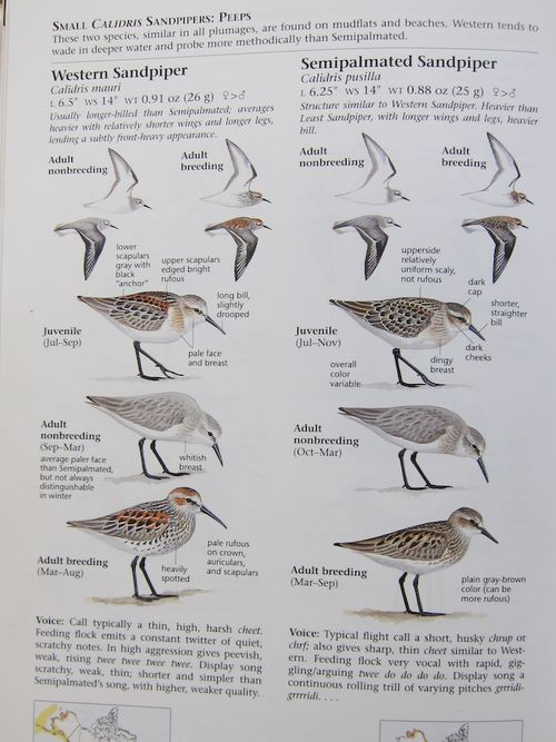 Fig 4b Bird book (4 of 4)-1