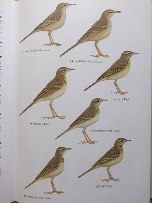 Fig 3 Bird book (2 of 4)-1