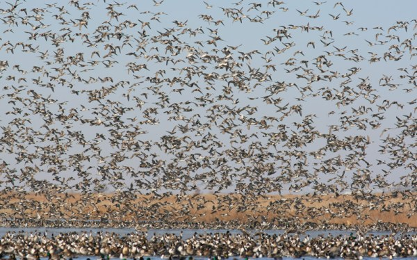 The Rainwater Basin provides important habitat to hundreds of thousands of migrating waterfowl. Photo by Doug Steinke.