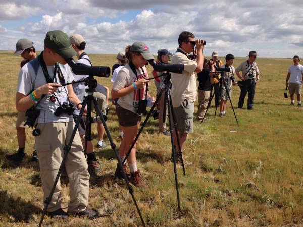 Looking for longspurs. (Photo by Jennie Duberstein).