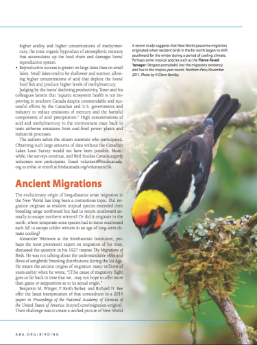 """For full access to Paul Hess's """"News and Notes"""" column in Birding magazine, click on the link in the main text of this article."""