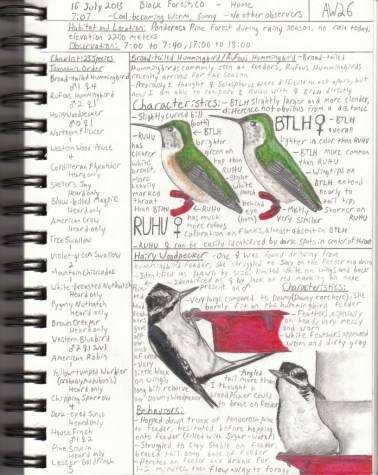 A page from the field notebook of 2014 Young Birder of the Year, Alec Wyatt