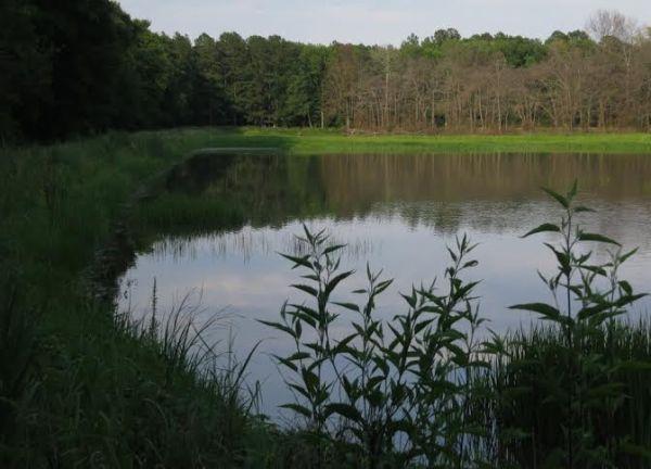 Dr. Ingersoll's wetland