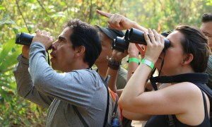 On the Northern Colombia Birding Trail, birders spy a Lance-tailed Manakin at Tayrona National Natural Park. (Photo by Natalia ?).