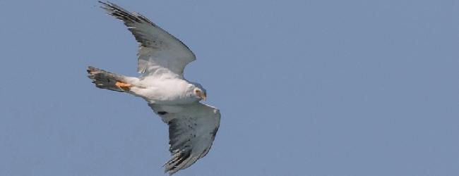 Birding Photo Quiz: August 2017