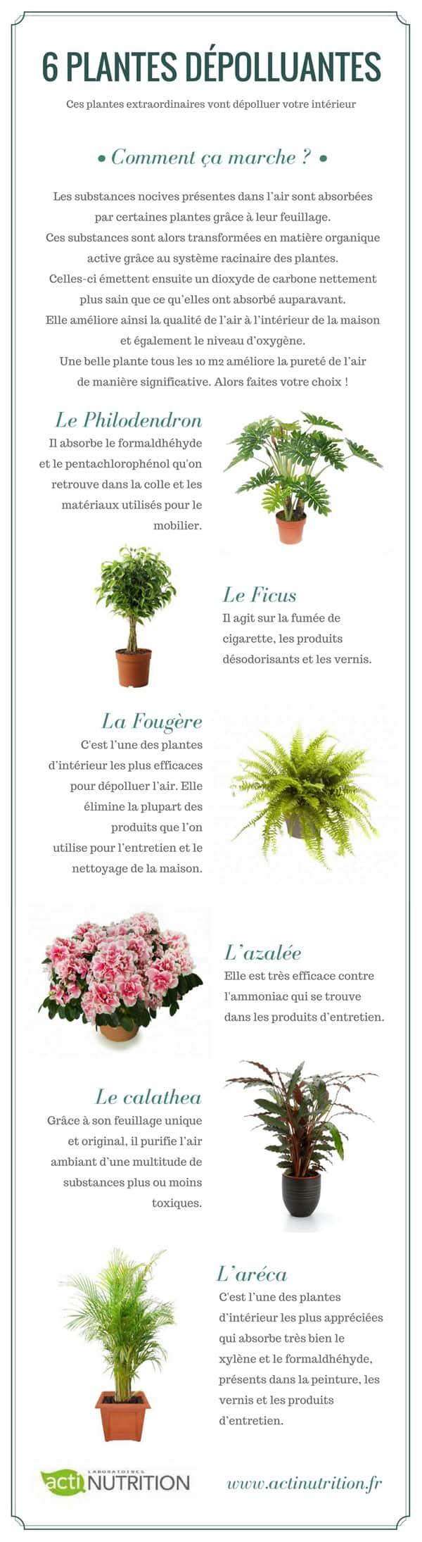 Infographie sur les plantes dépolluantes