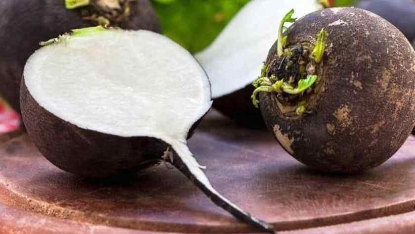 Le radis noir, ses bienfaits sur les fonctions hépatiques.