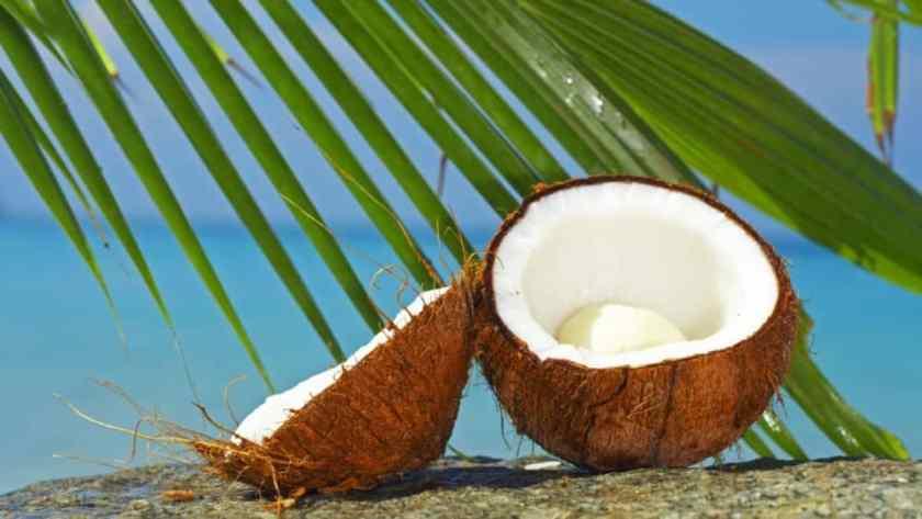 Les bienfaits de la noix de coco sur la mémoire.