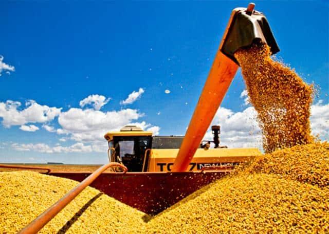 colheita embrapa de milho