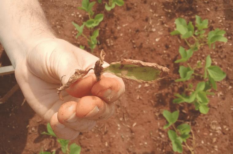 Tudo-sobre-plantas-daninhas