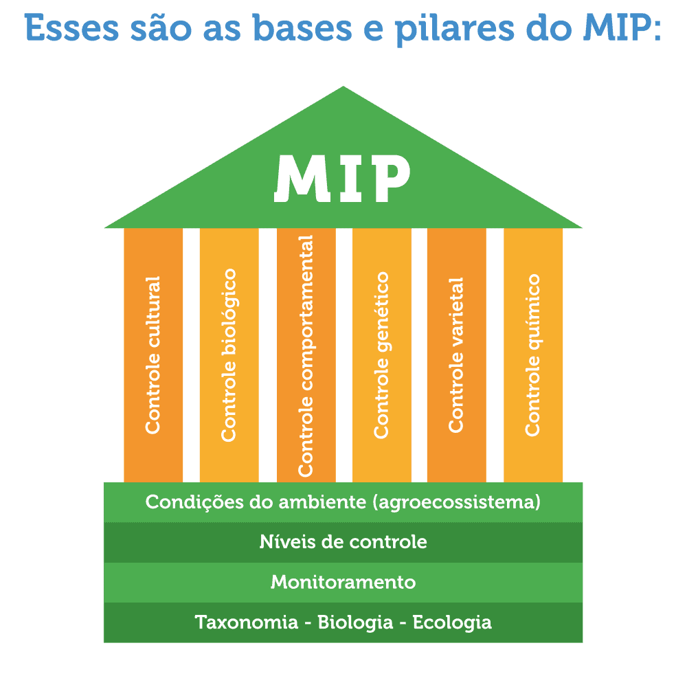 bases-e-pilares-do-MIP