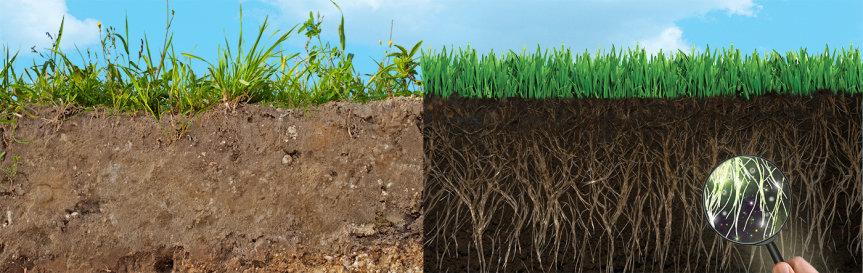 adubação-verde-solo