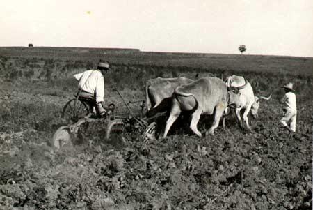 implementos-agrícolas-primordios