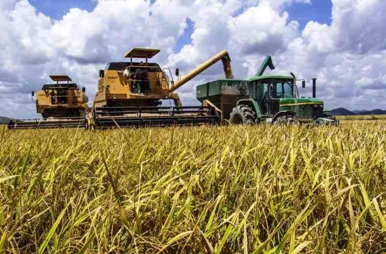 colheita-de-arroz