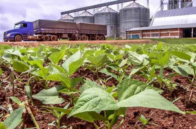 agronegócio no Brasil