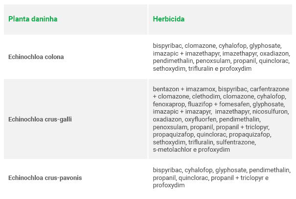 Tabela com plantas daninhas (Echinochloa colona, Echinochloa crus-falli e Echinochloa crus-pavonis) e herbicidas correspondentes.