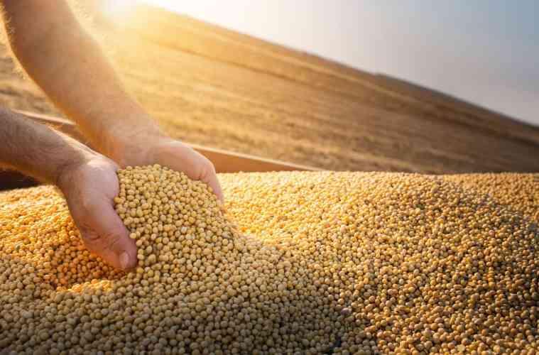 qualidade de grãos