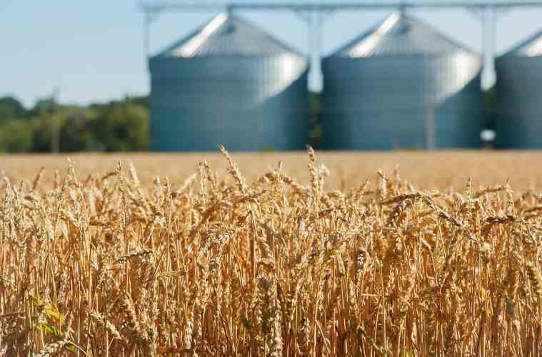 armazenamento de trigo