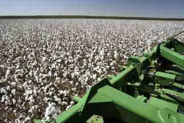 preços do algodão para 2021