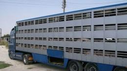 Transport animaux vivants