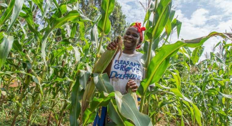 LINKING-SMALLHOLDER-FARMERS-TO-MARKETS-IN-NIGERIA