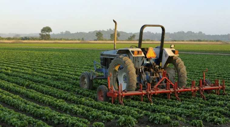 Wrong-Reasons-for-not-Investing-in-Agriculture-in-Nigeria