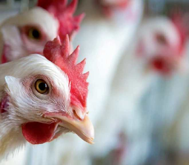 Starting Your Own Agribusiness Poultry Farm