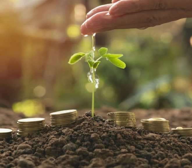 Ways to Become a Profitable Agribusiness Investor in Nigeria
