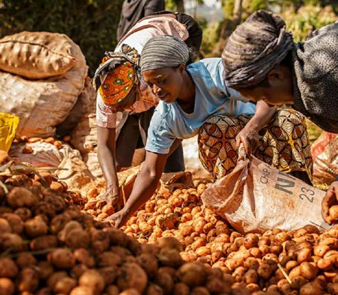 AgroDomain Marketplace Empowers Smallholder Farmers in Nigeria