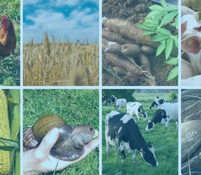 The Profitable Aspect of Farm Business in Nigeria