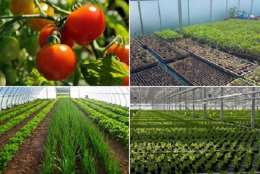 4-Reasons-Investors-Will-Buy-Into-Your-Farm-Project-in-Nigeria-Agribusiness
