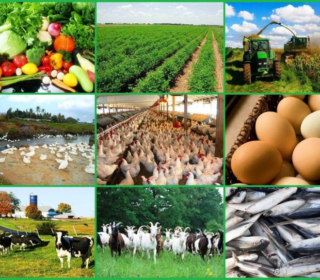 AgroDomain- King of Agribusiness Online Marketplace in Africa