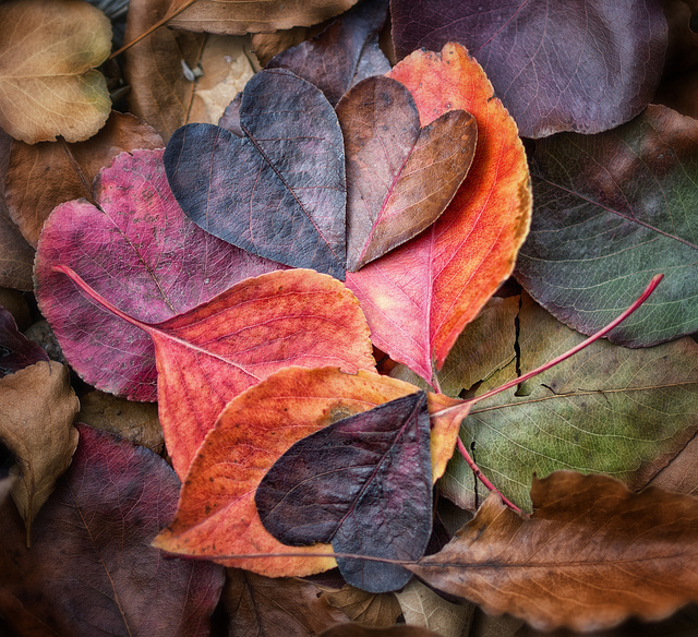 magic life Aimee Cartier blog leaf hearts pic by Anne Worner