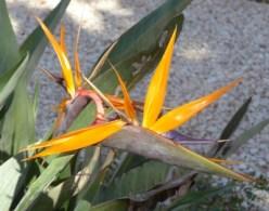 Foto einer gelben Blume