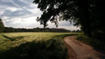 Foto: grünes Feld mit Weg