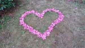 Foto eines gelegten Herzens aus Blumen aus