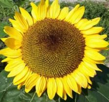 Foto von einer Blüte