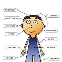 Learn Parts of the body in French.